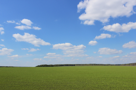 boundless: Summer landscape with a view of the boundless field and sky with clouds Stock Photo