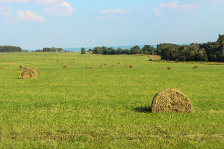 haymow: Landscape with a view of the mown field and a haystack on it