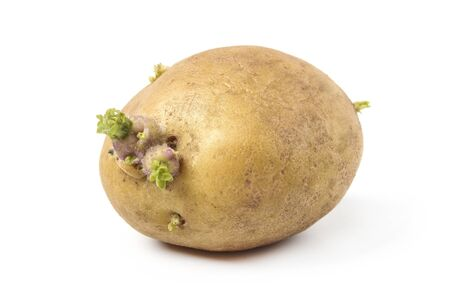 Pommes de terre avec des germes pour la plantation d'isolement sur le blanc Banque d'images