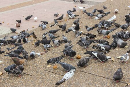 Pigeons in a city park on the steps pecking scattered bread crumbs