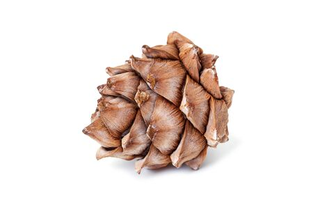 Cedar cone close-up isolated on a white background