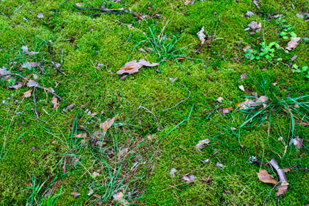Moss and grass in the swamp as background