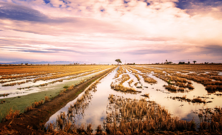 Rice fields flooded with water. You can reflect, to dramatic sky and a spectacular landscape.