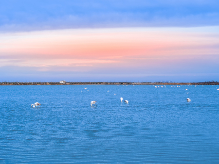 Saltworks in San Pedro del Pinatar at sunset. Flamingos are seen in the water. The salt flats of San Pedro are very famous for mud Stock Photo