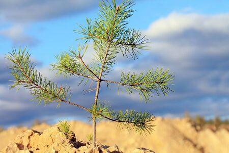 stubbornness: Tree on a rock