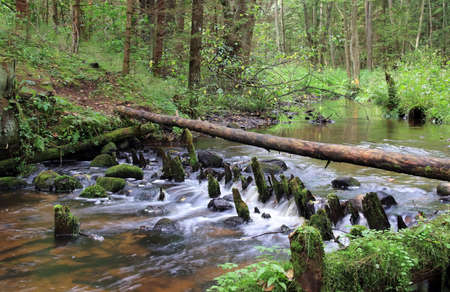 stream in the wild forest