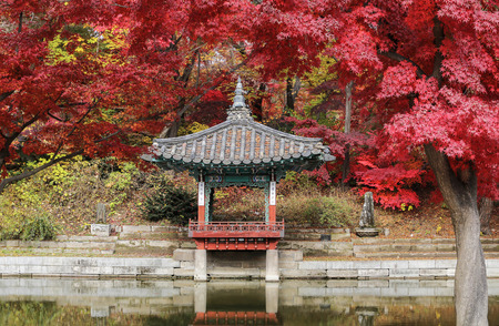 Autumn season in south korea, This place situated in Garden of Changdeokgung Palace, South Kore Standard-Bild