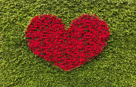 Red heart flowers on a green background