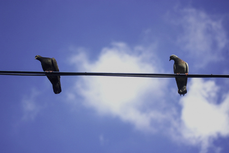Dove on the wires with Blue sky