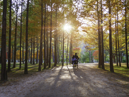Autumn of Nami island at sunset South Korea. Stock Photo