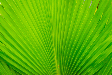 naturally: This is a green leaf patterned disorder naturally