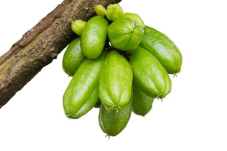 bilimbi: Averrhoa green with a bokeh effect  Stock Photo