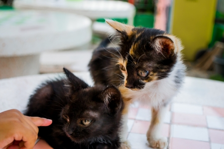 bright eyed: Three bright eyed kitten on the table  Stock Photo
