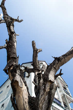 Dead tree behind a building against the sky, fresh style. photo