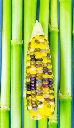 Colorful Indian corn photo