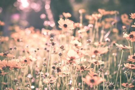summer vintage beautiful flowers on sunrise
