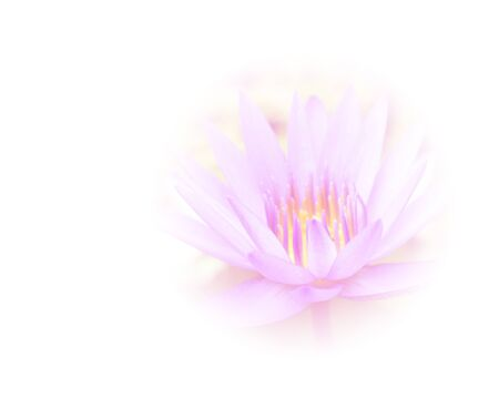 out of focus: abstract background flower is out of focus blur made with color filter