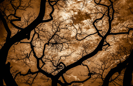 winter tree: Halloween background. Tree silhouette on orange sky background Stock Photo