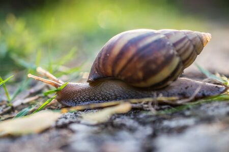 sharpness: Snail on moss, Cepaea, open conch, small depth to sharpness Stock Photo