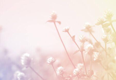 primavera: flores de malezas en la textura de la vendimia del estilo del color para el fondo