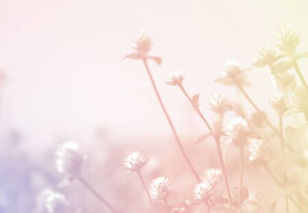 weed flowers in vintage color style texture for background