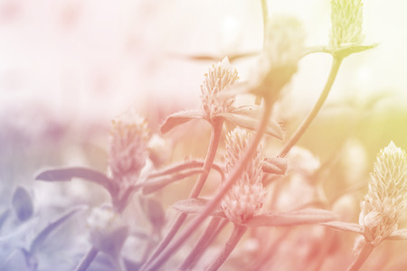 weed flowers in vintage color style texture for blur background 写真素材