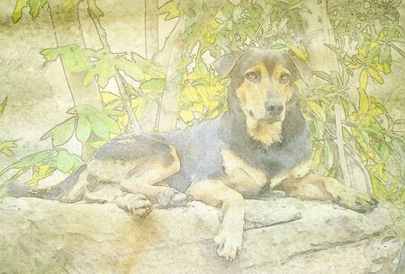 painted dog: Vintage watercolour illustration: Dog . Art is painted and created by photographer.