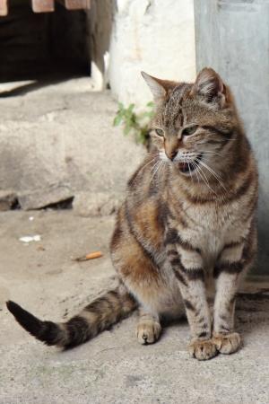 fierce: Fierce stripe cat Stock Photo