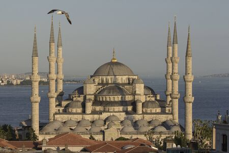 Blue mosque with seagull, Istanbul, Turkey  photo