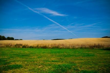 green grass field, yellow corn field and blue sky photo