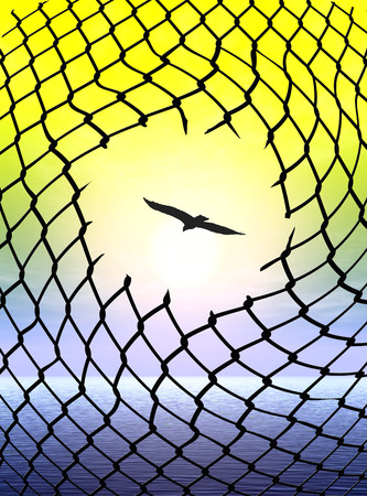 fugitive: Desire for Freedom. Eagle escaping from cage as symbol and metaphor for human freedom Stock Photo