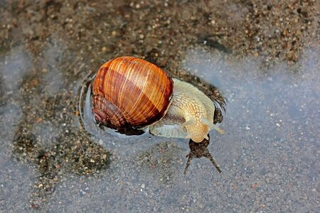 to move forward: Quietly located on the water molluscs, trying to move forward.
