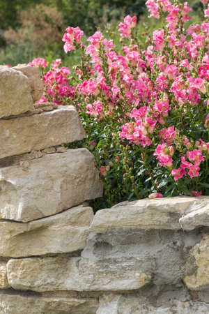 landscaped garden: Stone wall, steps and planter on colorful landscaped garden