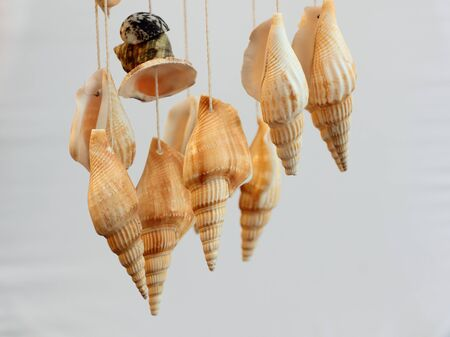 enact: Set shells hanging on the filaments who enact particular IP sound of reminding of sea. Stock Photo