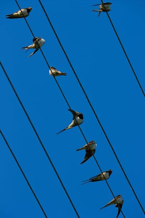 hilarity: Group of birds is resting on the wires having placed Stock Photo