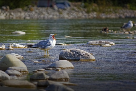squawk: In the hot afternoon bird resting in the shallow waters by fly and the heat
