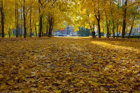 Alley autumn Park.