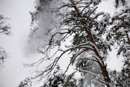 Types of winter the taiga Фото со стока