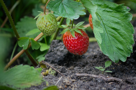Matures Berry on the plot.