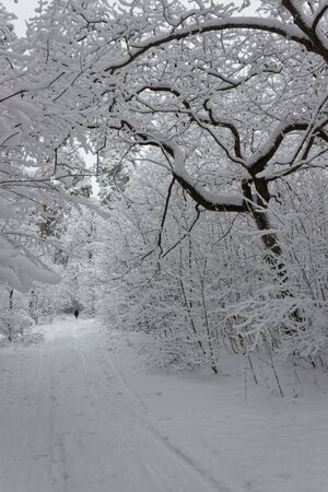 A perspective view of a snowy forest path in the middle of winter.
