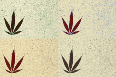 businesscard: Four tiles of marijuana, Which Can Be Used as background for everything Stock Photo