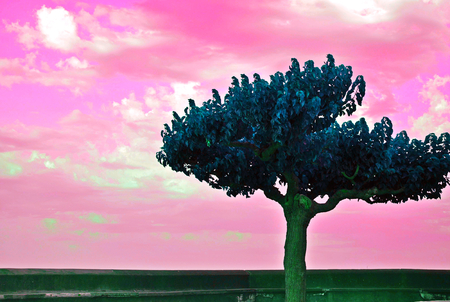 reversed: Beautiful tree and soft pink sky heaven dreamy atmosphere photo with reversed colors Stock Photo
