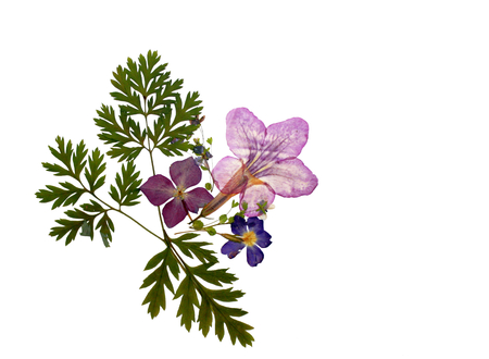 Beautiful isolated floral pressed flower decration, natural colorful empty background with dry plants