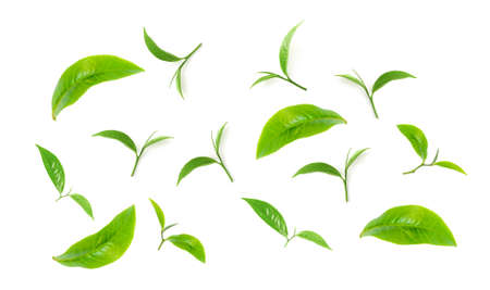 Green tea leaf collection isolated on white background Banco de Imagens