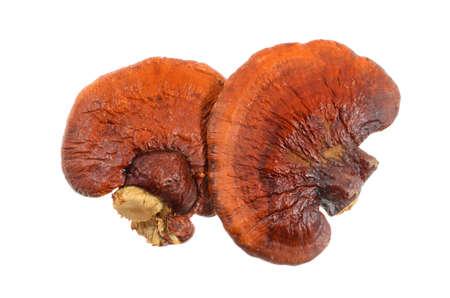 lingzhi mushroom on white background Standard-Bild