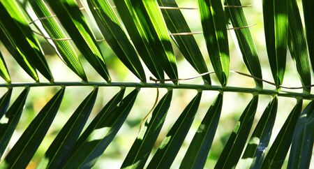 Green leaves of a tropical plant Stock Photo