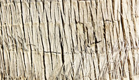 nuances: Bark of a palm for funds and textures