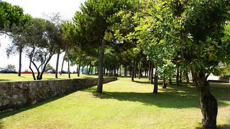 littoral: grove in a park of the littoral of Barcelona