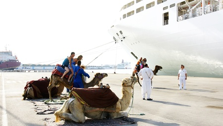 Camels to walk tourists in the port of The Goulette, Tunis