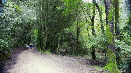Forest way of the Parc de Collserola in Barcelona